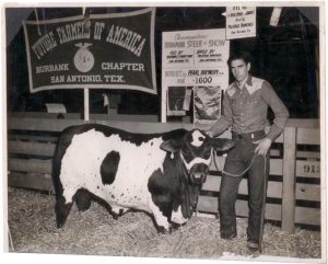 """White Sidewall"" Grand Champion cross-bred steer of the 1954 San Antonio Livestock Exposition; Burbank Chapter FFA entry, bred by Paleface Ranches, shown by Joe Kunze, and purchased by Pearl Brewery."
